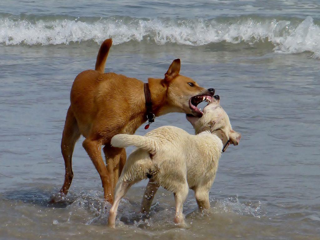 sogni cani lotta partner