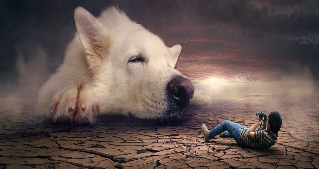 il cane nei sogni